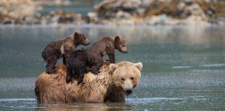 maman et deux oursons