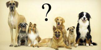 comment-choisir-son-chien