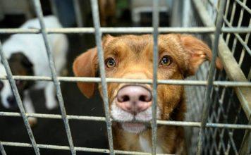 les refuges pour animaux ferments leurs portes