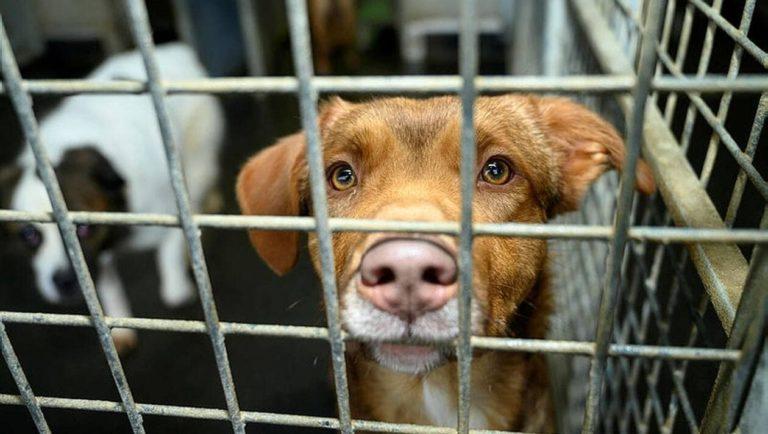 Coronavirus : Les refuges pour animaux ferment leurs portes