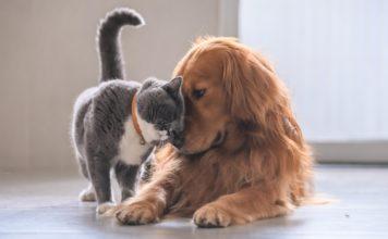 Les chats et chiens victimes de coronavirus