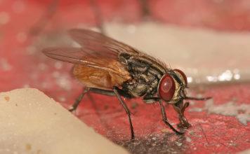 Astuces naturelles pour de sébarasser des mouches